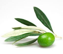 Olive Leaf Extract 20% 40% 60% Oleuropein