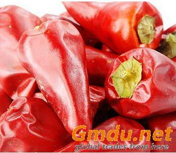 Spicy new generational chili for cooking or food ingredient