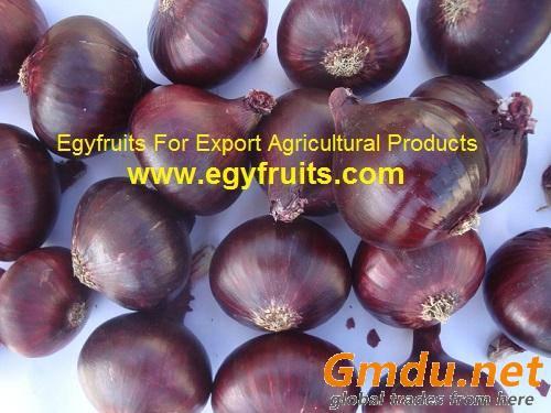 Egyptian Fresh Red Onion