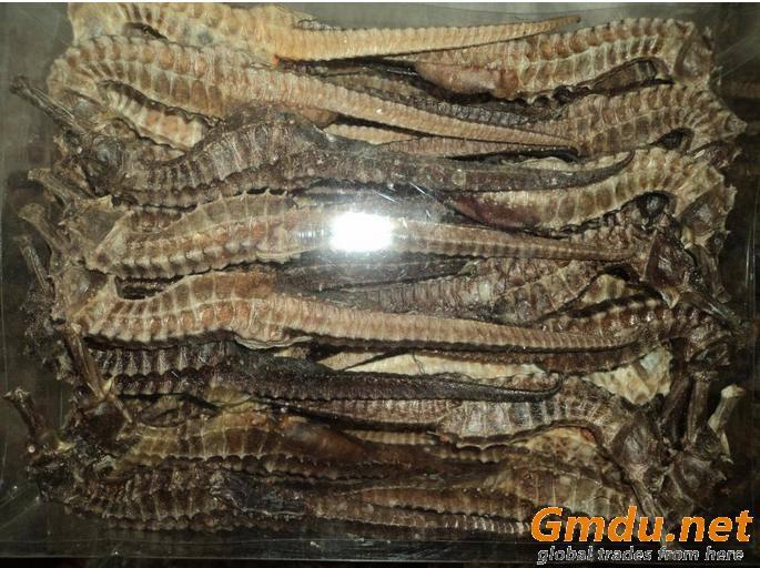 Premium Dried Sea Horse ( wonderful Prices)