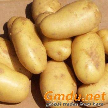 Fresh Onion & Potato