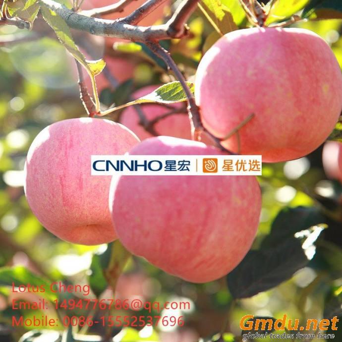Fresh Fuji Apple for sale