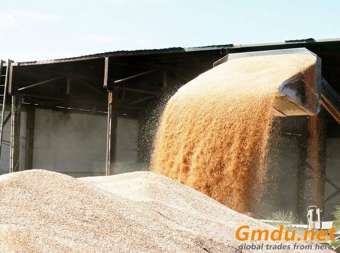 Milling wheat FOB Novorossiysk Russia